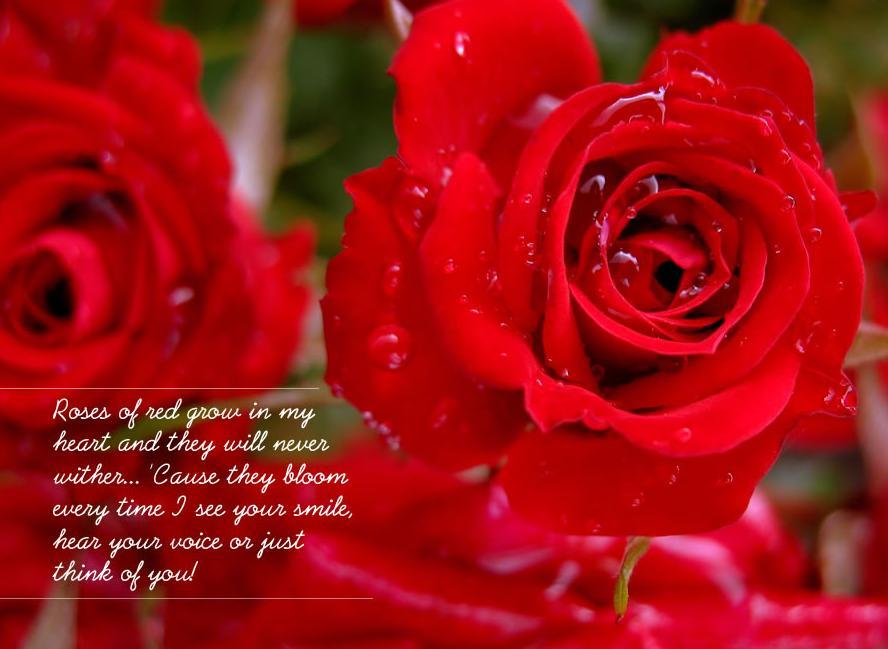red rose poetry Beautiful Red Rose Wallpaper Saying